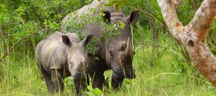 1 day Rhino Tracking tour