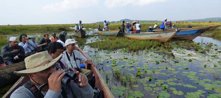 Shoebill birding trip to Mabamba Swamp