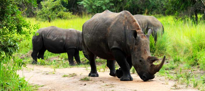 3 Days Murchison Falls safari and Rhino Tracking, Ziwa rhino sanctuary