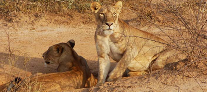 3 days queen elizabeth and lake mburo national parks