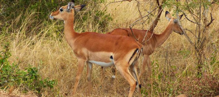5 Days Kidepo Valley National Park Roads wildlife safari