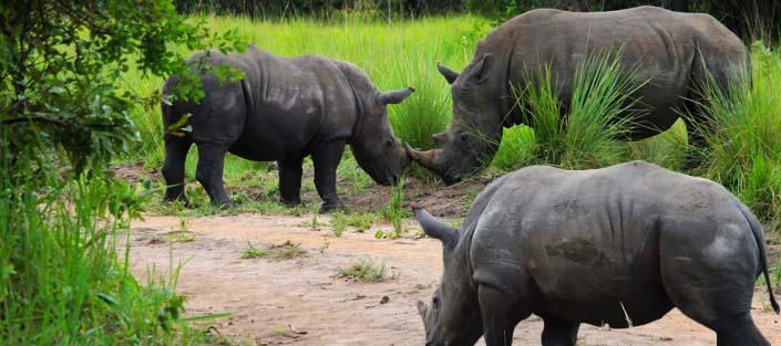 5 Days Murchison Falls and Queen Elizabeth national park safari