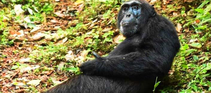 6 days wildlife and Chimpanzee tour