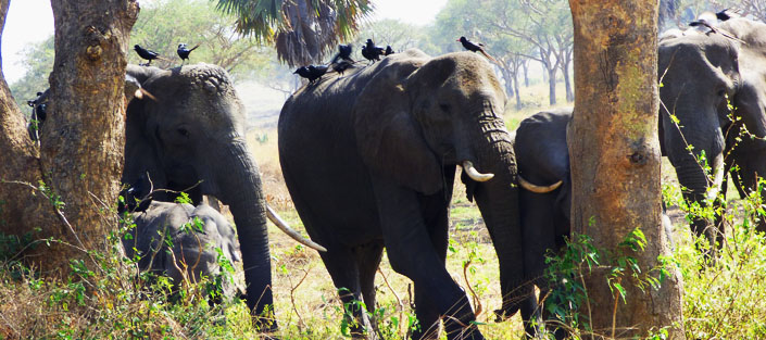 14 Days Uganda wildlife safari - Uganda Safari tours