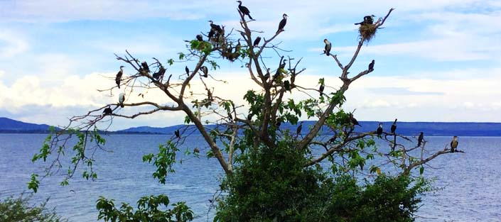 Lake Victoria, Bird watching, Boat cruise
